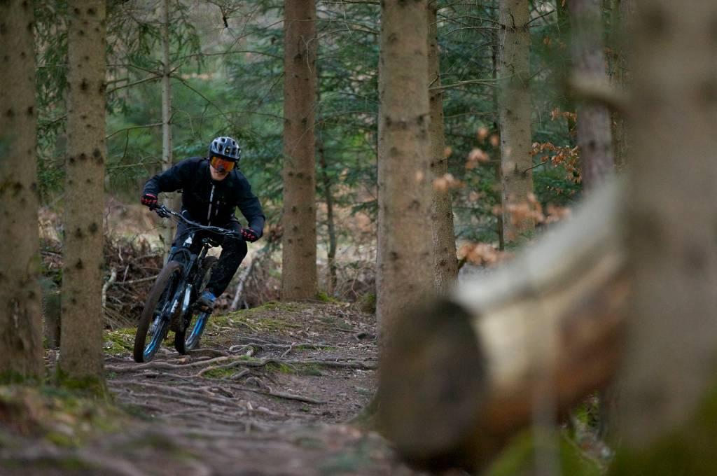 Das Bike bietet massig Traktion über Wurzelfelder