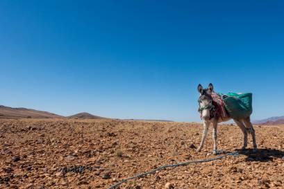 Atlas Mountain Race Marokko Bikepacking